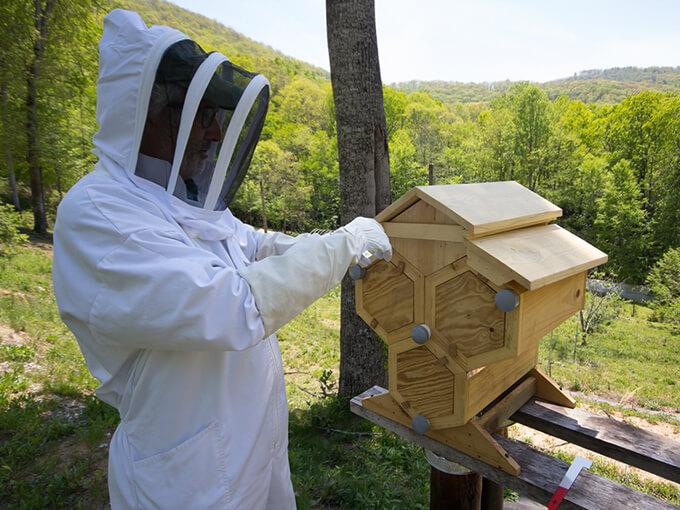 Honeycomb Hives